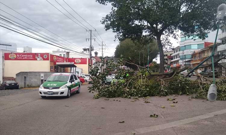 39 municipios afectados en Veracruz por frente 41